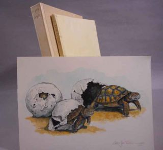 Tortoises. Woodengravings by Alan James Robinson. Introduction by Jefferson Hunter. D. H....